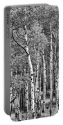 A Stand Of Aspen Trees In Black And White Portable Battery Charger