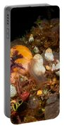 A Ton Of Tunicates Portable Battery Charger