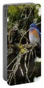 A Western Bluebird In A Tree Portable Battery Charger