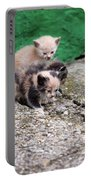 Abandoned Kittens On The Street Portable Battery Charger