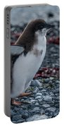 Adelie Penguin Chick Running Along Stony Beach Portable Battery Charger