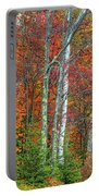 Adirondack Birches In Autumn Portable Battery Charger