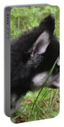 Adorable Alusky Pup Creeping Through Tall Blades Of Grass Portable Battery Charger