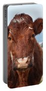 Adorable Brown Cow Standing On The Burren Portable Battery Charger