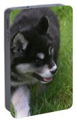 Adorable Fluffy Alusky Puppy Walking In Tall Grass Portable Battery Charger