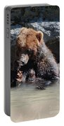 Adorable Grizzly Bear Playing With A Maple Leaf While Sitting In Portable Battery Charger