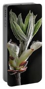 Aesculus Hippocastanum Horse Chestnut 2 Portable Battery Charger