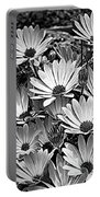 African Daisies In Black And White Portable Battery Charger