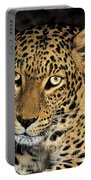 African Leopard Panthera Pardus Captive Wildlife Rescue Portable Battery Charger