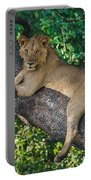 African Lion Panthera Leo On Tree, Lake Portable Battery Charger