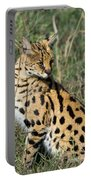 African Serval In Ngorongoro Conservation Area Portable Battery Charger