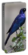 African White Eye Starling Portable Battery Charger