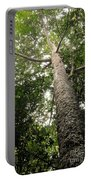 Agathis Borneensis Tree Portable Battery Charger