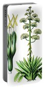 Agave Americana, Common Names Century Plant, Maguey Or American  Portable Battery Charger
