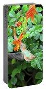 Allen's Hummingbird In Cape Honeysuckle Portable Battery Charger