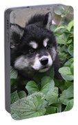 Alusky Pup Peaking Out Of Green Foliage Portable Battery Charger