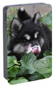 Alusky Puppy Dog Licking The Tip Of His Nose Portable Battery Charger