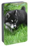 Alusky Puppy Dog Spotting A Toy To Play With Portable Battery Charger