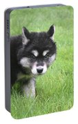 Alusky Puppy Looking Like  He Was Caught Red Handed Portable Battery Charger