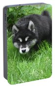 Alusky Puppy Stalking Through Tall Green Grass Portable Battery Charger