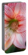Amaryllis And Tree Frog Painted  Portable Battery Charger
