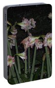 Amaryllis At Night After A Rain Portable Battery Charger