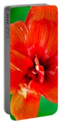 Amaryllis Contrast Orange Amaryllis Flower Appearing To Float Above A Deep Green Background Portable Battery Charger