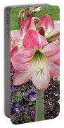 Amazing Amaryllis - Pink And White Apple Blossom Hippeastrum Hybrid Portable Battery Charger