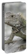 Amazing Posing Gray Iguana Perched On A Log Portable Battery Charger