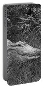 American Alligator 2 Bw Portable Battery Charger