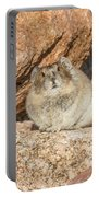 American Pika Focuses On The Camera Portable Battery Charger