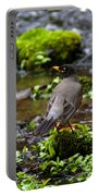 American Robin In Garden Springs Creek Portable Battery Charger