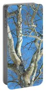 American Sycamore - Platanus Occidentalis Portable Battery Charger