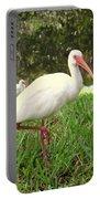 American White Ibis Birds In Orlando, Florida Portable Battery Charger
