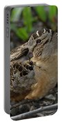 American Woodcock At Rest Portable Battery Charger