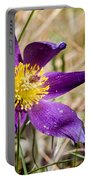 Anemone Pulsatilla Portable Battery Charger
