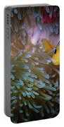 Anemonefish Portable Battery Charger