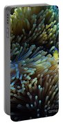 Anemonefish Hiding Portable Battery Charger