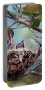 Anna's Hummingbirds Portable Battery Charger