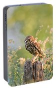Anticipation - Little Owl Staring At Its Prey Portable Battery Charger