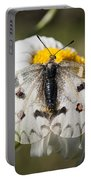 Apollo Butterfly Portable Battery Charger