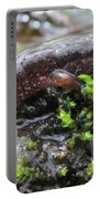 Appalachian Seal Salamander Portable Battery Charger