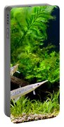 Aquarium Fish Couple In Zoo Portable Battery Charger