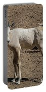 Arabian Oryx Baby Portable Battery Charger