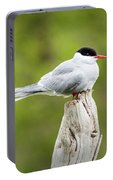 Arctic Tern Portable Battery Charger