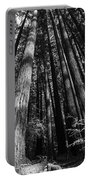 Armstrong National Park Redwoods Filtered Sun Black And White Portable Battery Charger