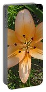 Asiatic Lily With Poster Edges Portable Battery Charger