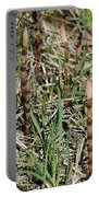 Asparagus In The Wild Portable Battery Charger