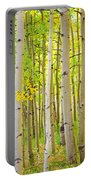 Aspen Tree Forest Autumn Time Portrait Portable Battery Charger