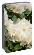 Azaleas Rhodies Landscape White Pink Rhododendrum Flowers 8 Giclee Art Prints Baslee Troutman Portable Battery Charger